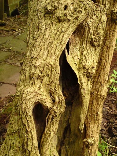 Elder trunk